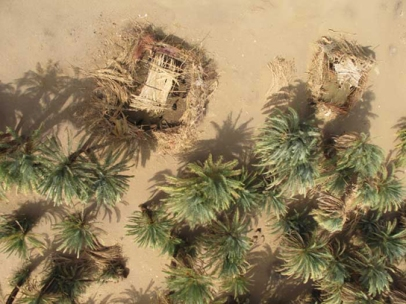 """Two """"zareeba"""" (enclosure for keeping goats) amongst the palm trees beside our house"""