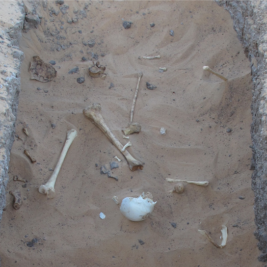 Scattered human bones on the shaft of one of the looted tombs