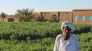 Mohamed Sayed on Ernetta island