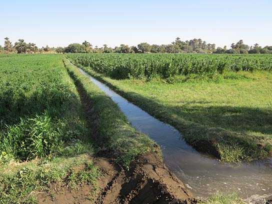 Irrigation canals, Ernetta