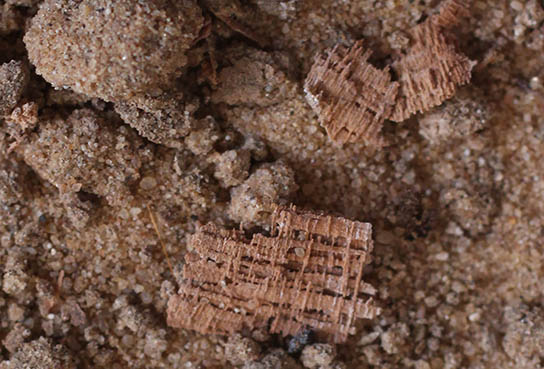 Tantalising fragments of papyri from house D12.8
