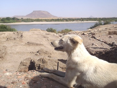 A dog in Nubia, on Tuesday (thank you AcrossBorders!).